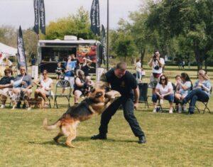 photo of attack dog hitting training sleeve